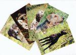 Набор открыток породы собак 55